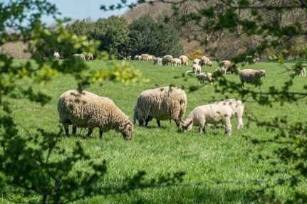 Farming Community